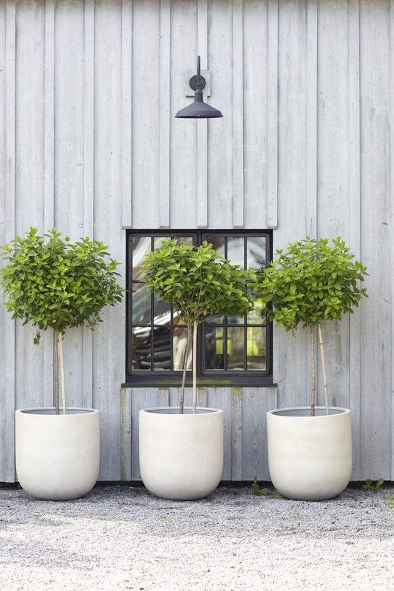le fioriere a coppa in cemento bianco con alberi sono fantastiche non solo per uno spazio moderno ma anche per uno rustico