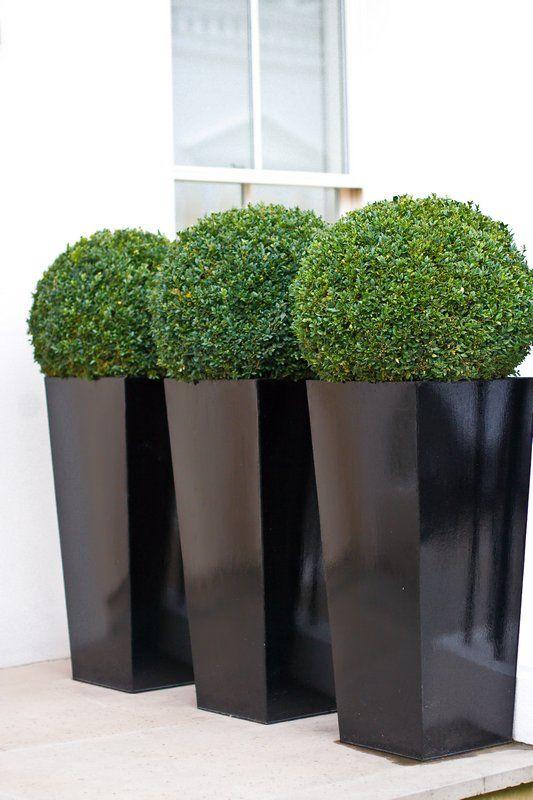 alte fioriere nere con topiaria verde sono decorazioni esterne moderne chic da rock