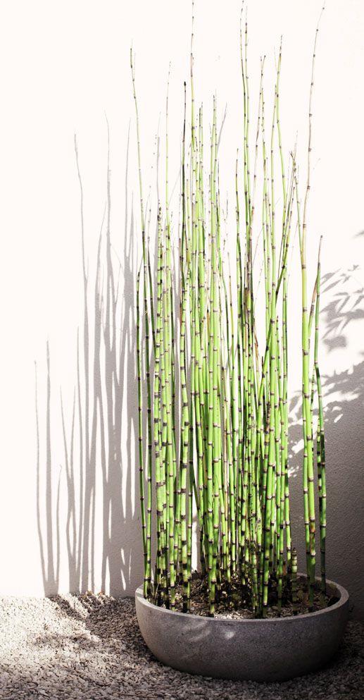 una ciotola di cemento con bambù è un pezzo ultra-moderno, e una tale fioriera può essere anche fai da te