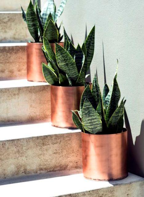 mini fioriere in rame con piante grasse sono perfette per allineare il corridoio o un sentiero e sicuramente daranno un tocco moderno ai tuoi spazi aperti