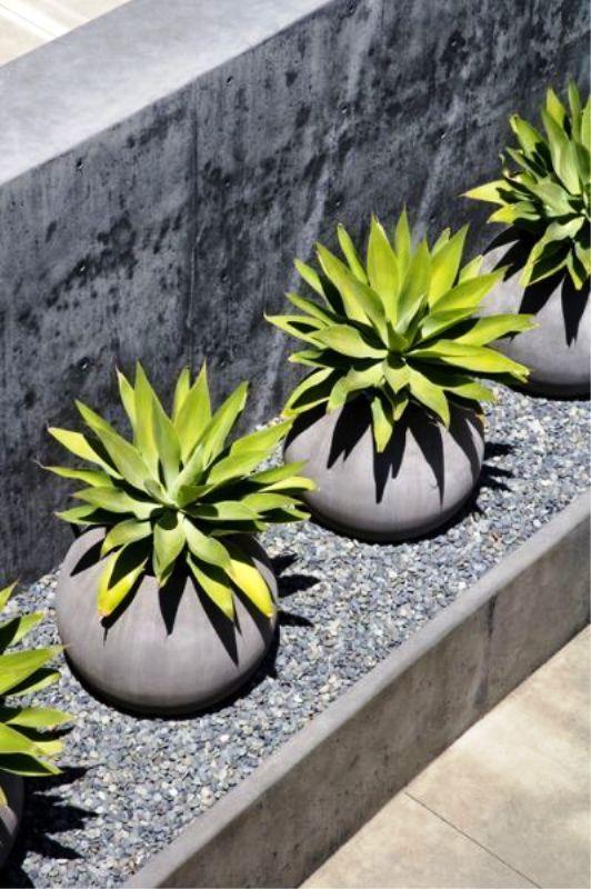 Le fioriere rotonde in cemento con piante grasse sono perfette per allineare qualsiasi percorso o altro spazio nei tuoi spazi aperti