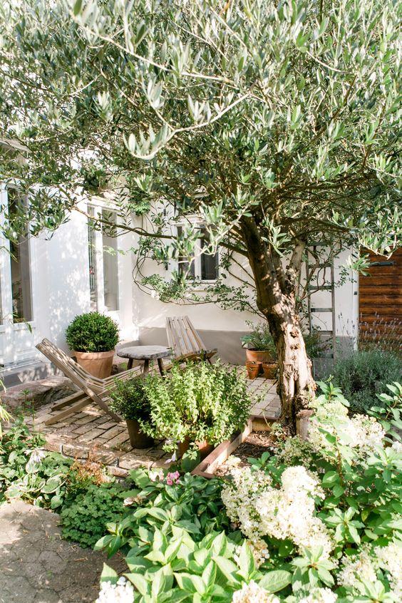 un piccolo e accogliente cortile con uno spazio rivestito di mattoni, alcune sedie in legno e molta vegetazione e un albero intorno
