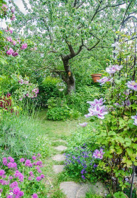 un piccolo ma molto rigoglioso giardino con tanto verde, erba, fiori colorati, arbusti e un grande albero al centro