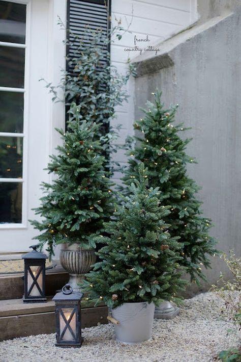 un grappolo di alberi di Natale non decorati con luci e alcune lanterne da loro compongono un fantastico arredamento per esterni