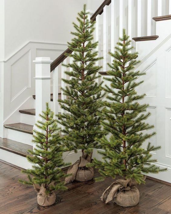 un trio di alberi di Natale non decorati avvolti in tela è una bella soluzione di arredo per aggiungere un tocco naturale e rustico