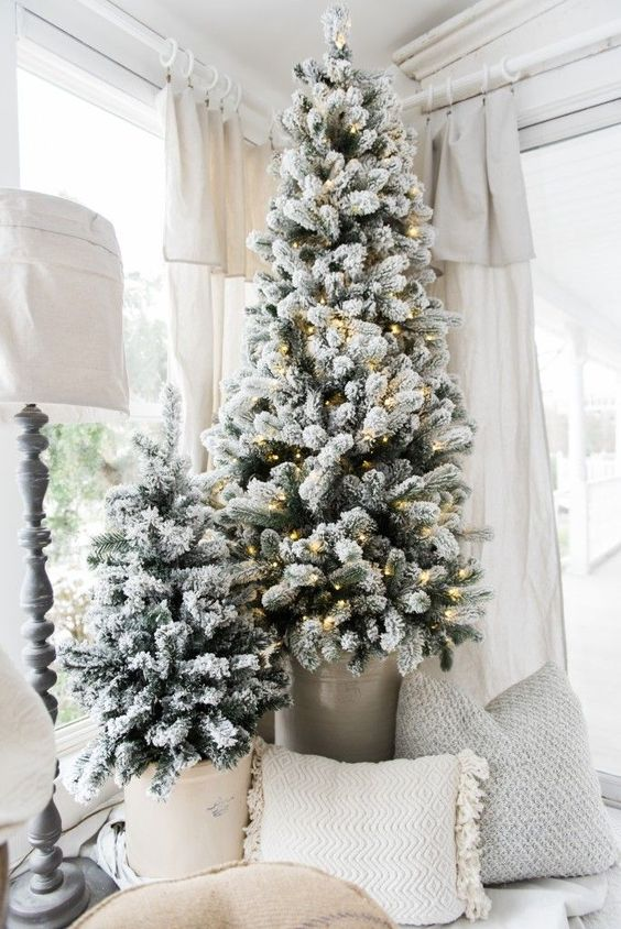 alberi di Natale affollati in secchi, uno di loro è decorato con luci, sembra molto bello uno spazio neutro della fattoria