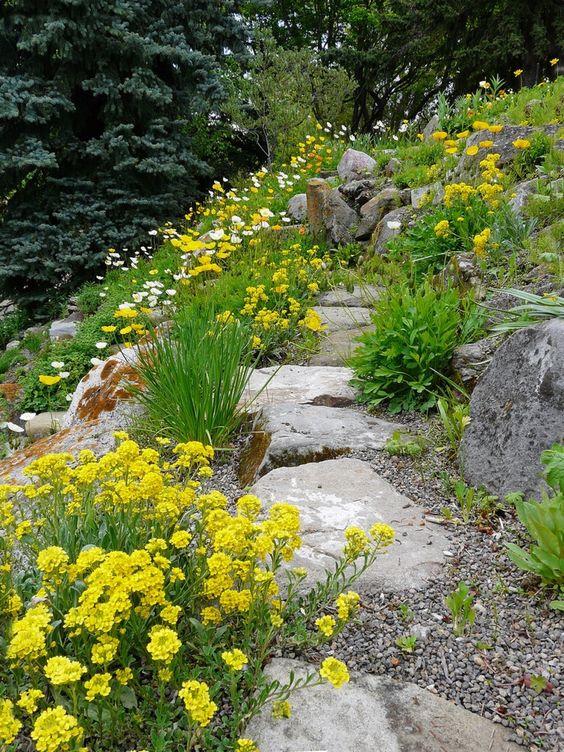 vialetto da giardino in ghiaia e pietra con vegetazione e fiori gialli luminosi intorno è un'idea interessante per un'atmosfera naturale