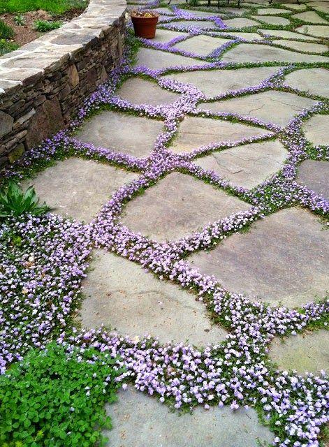 un sentiero giardino in pietra con fiori lilla in mezzo per evidenziare le pietre e contrastarle