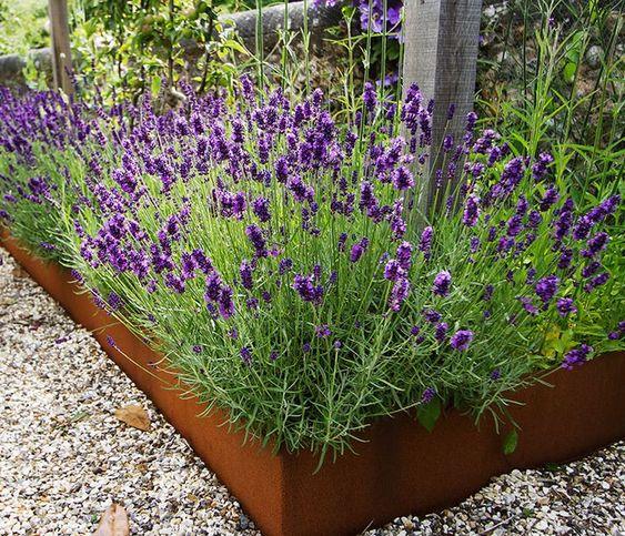 bordure per aiuole in metallo patinato con fiori viola brillanti compone una splendida combinazione
