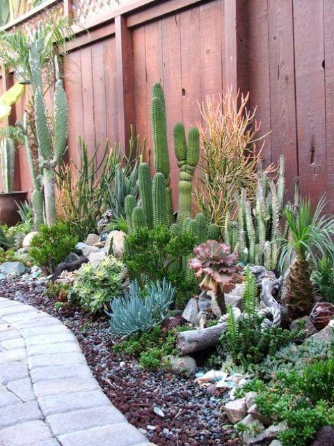 anche se accoppi le piante grasse con i cactus, dovresti innaffiare adeguatamente le piante grasse in base alla specie che hai