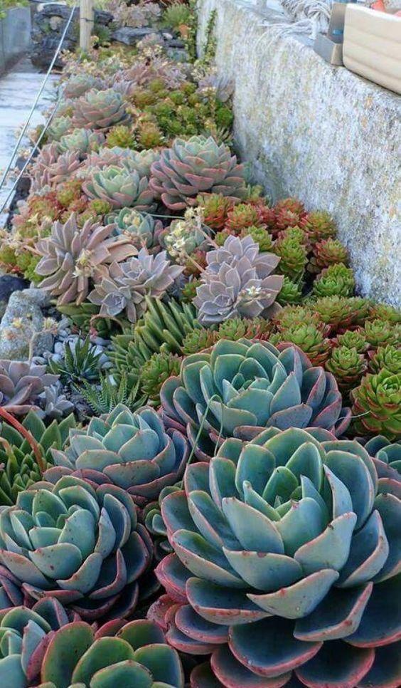 combina diversi tipi e colori di piante grasse e abbina quelle più grandi con quelle più piccole
