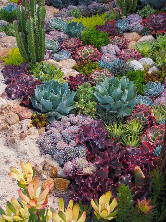 variare i cactus post e rotondi, in viola, grigio, verde e persino giallo per creare un paesaggio perfetto