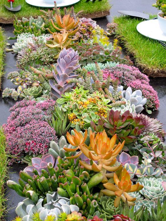 le piante grasse possono essere molto accattivanti e persino spettacolari, in varie tonalità e dimensioni