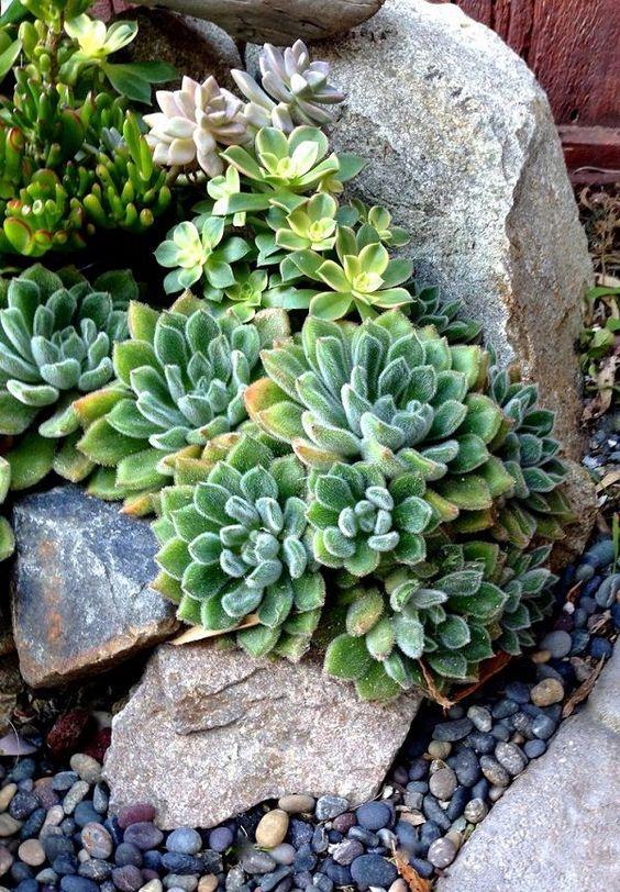 le piante grasse possono anche crescere nelle pietre se sono abbastanza grandi per quello