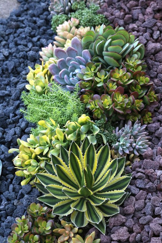 le piante grasse possono crescere durante la siccità, ma dovrai comunque innaffiarle adeguatamente
