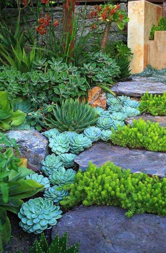 le piante grasse si allineano sui gradini e i gradini di roccia aggiungono eleganza alle piante, in particolare le piante grene audaci tra i gradini