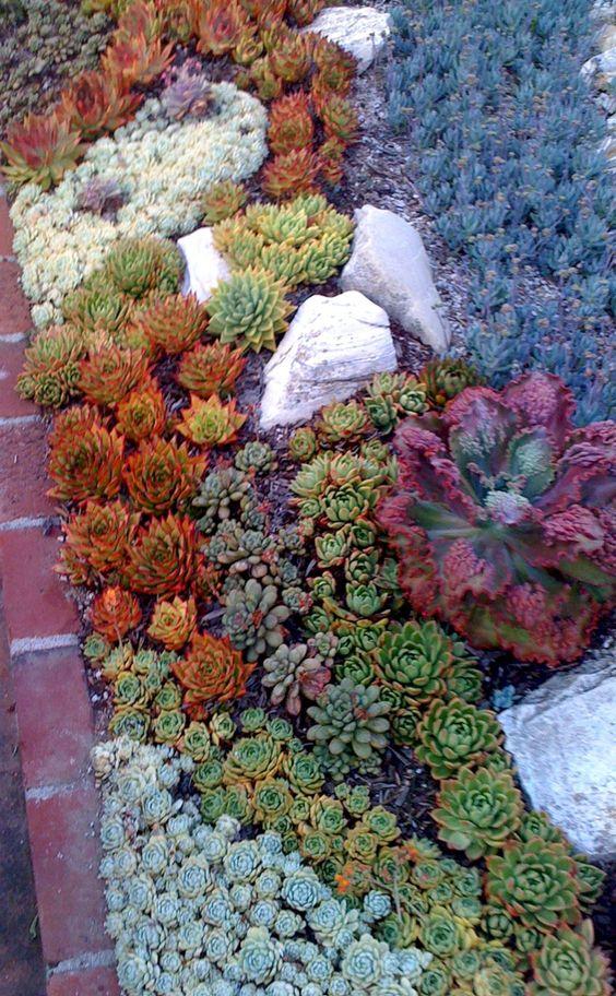 piante grasse colorate in arancione, verde, viola e grigio combinate con alcune rocce per un look fresco