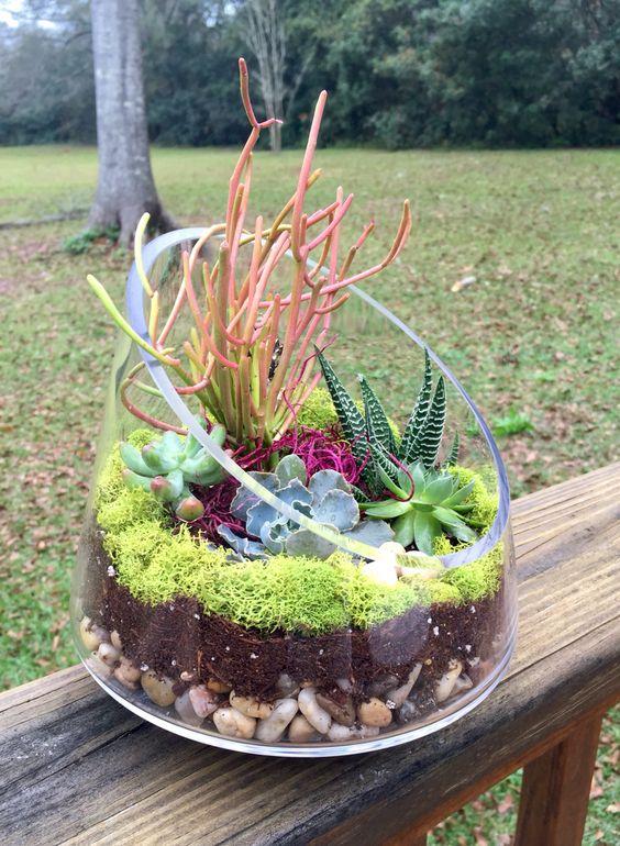 grandi contenitori possono essere usati anche per coltivare piante grasse e cactus, se fa freddo portateli dentro