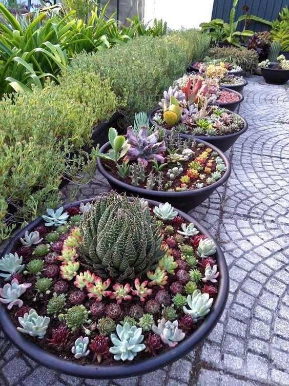 tale giardinaggio in contenitori è anche un'idea interessante, mescolare diverse piante grasse in vaso