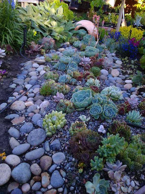mescolare varie piante grasse con ciottoli e rocce più grandi e più piccole per un paesaggio più naturale