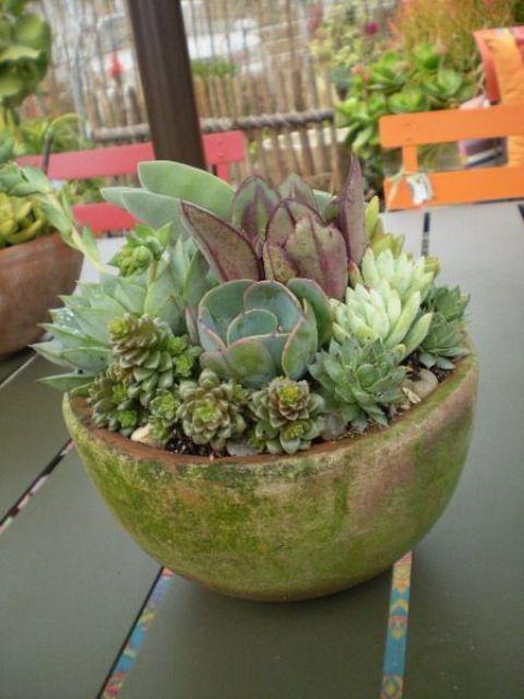 un vaso verde con piante grasse verdi e viola è un'idea intelligente per fornire un drenaggio adeguato