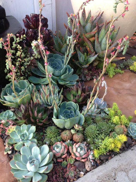 combina diverse trame, altezze, dimensioni e colori per rendere il tuo giardino succulento nel deserto più spettacolare