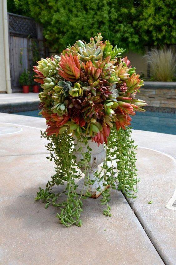 una corsa vintage con varie piante grasse comprese quelle a cascata è un'idea di arredamento fresca con un tocco di chic