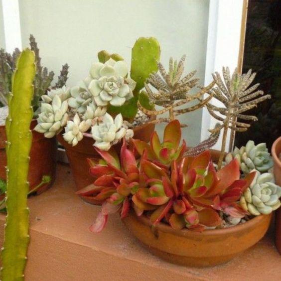 rock stessi vasi di terracotta con varie piante grasse per dare al tuo giardino un aspetto più coeso