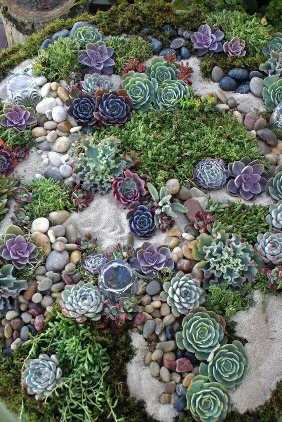 un giardino succulento chic con sabbia, ciottoli e vari tipi di piante grasse in bellissime tonalità
