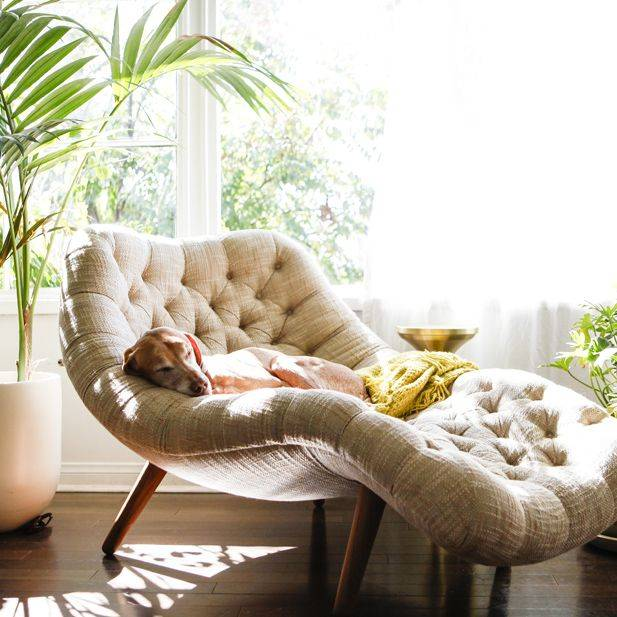un moderno lettino da lettura curvo posto vicino alla finestra è già preso da un cagnolino