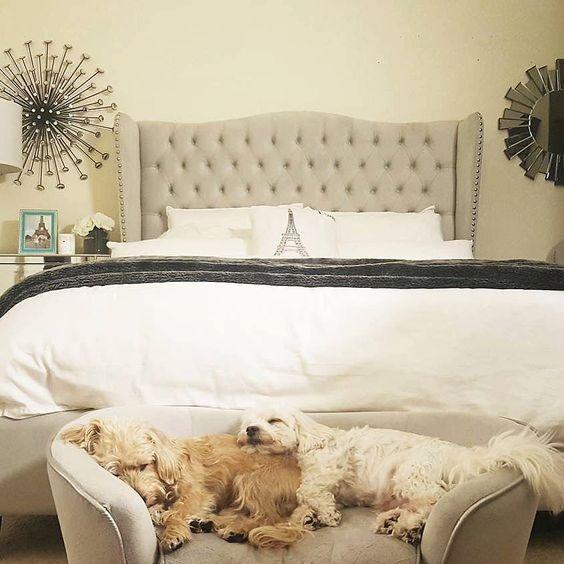 una piccola panca imbottita o un divano può essere utilizzata dai tuoi animali domestici per dormire facilmente