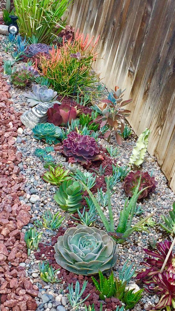 le piante grasse sono disponibili in molti colori diversi, da varie tonalità di verde a bordeaux e grigio